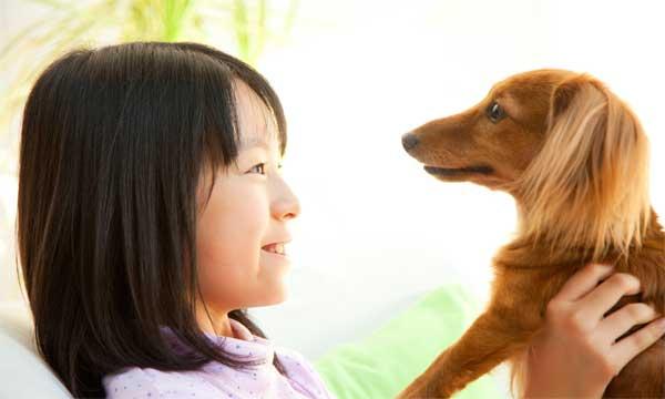 ペット保険の選び方