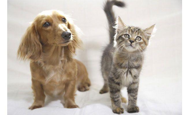 ペット保険販売に役立つ資格(概要・難易度)