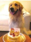 愛犬とペットのバースデーケーキ