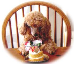 ワンちゃんとクリスマスケーキ