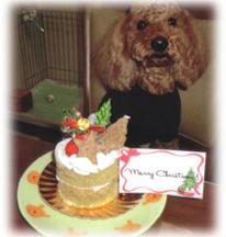 プードルちゃんも大喜びクリスマスケーキ