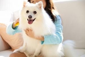 子犬の飼い方(注意)
